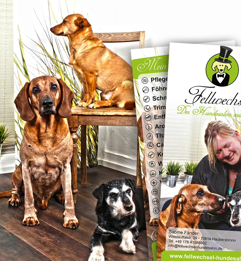 Fotografie von Hunden im Wartezimmer des Hundesalons Fellwechsel